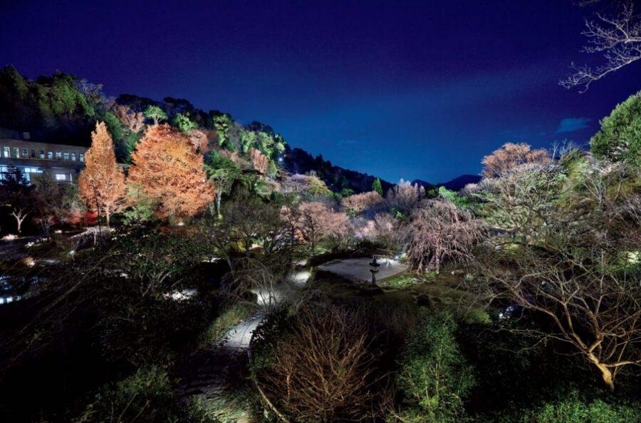 高知県立牧野植物園 よるまきの